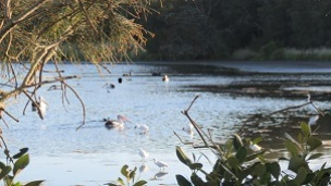 A history of Belmont Lagoon